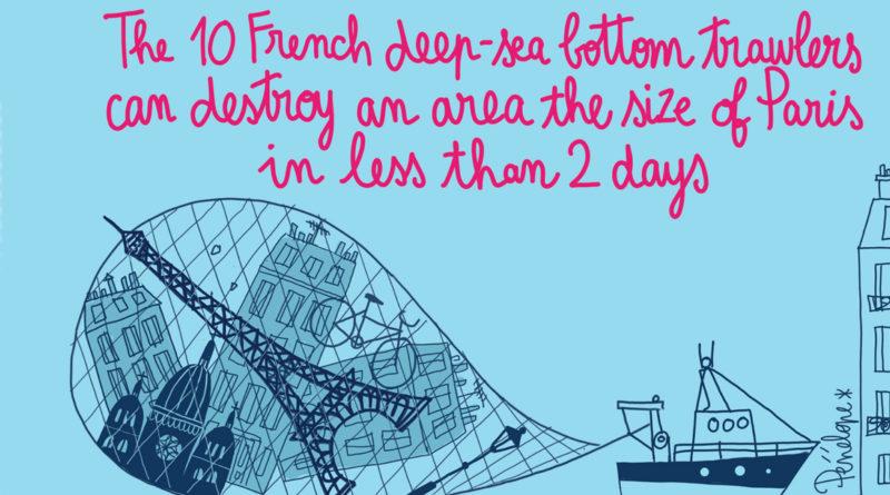 chalutage, pêche, union européenne, elena blum