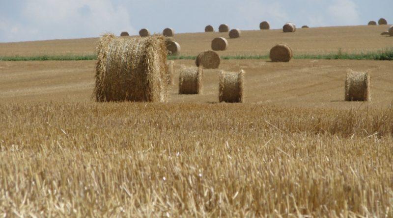 Mathilde Ciulla politique agricole commune PAC
