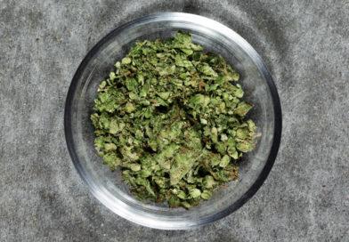 Cannabis : à quand une réglementation européenne ?