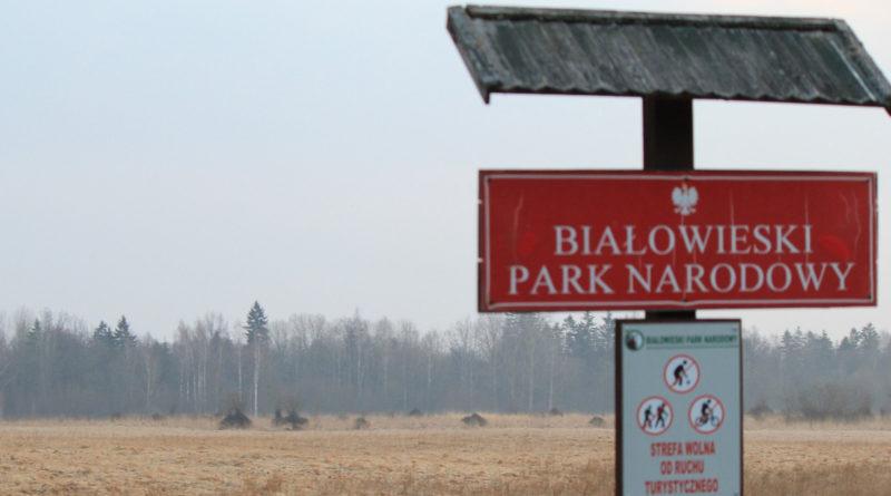 Union européenne et protection de l'environnement : le cas Bialowieza